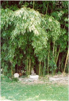 Bouddha et bambou