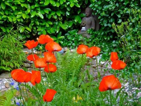 Bouddha et coquelicots
